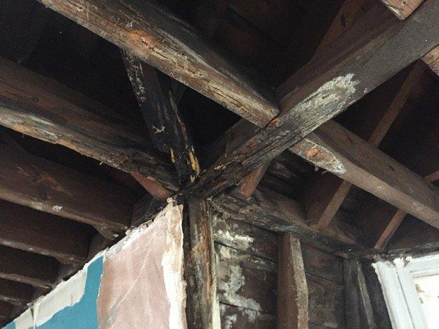damp rotten wood