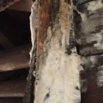 old wood damp damage